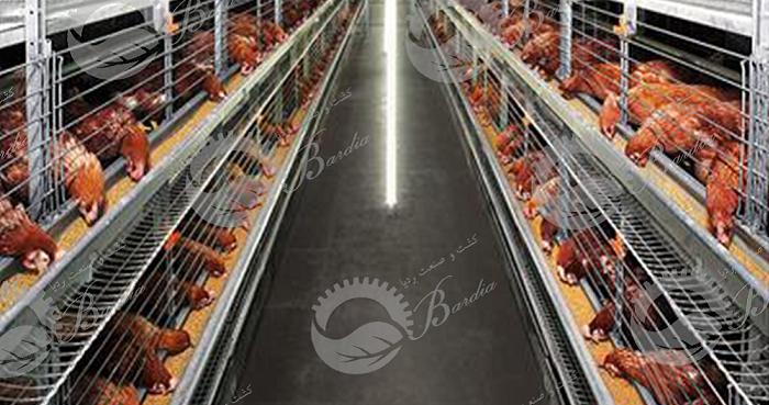 قفس مرغ تخمگذار دست دوم